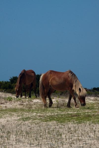 Shackleford ponies 2