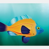 Digital Illustration: Fish