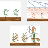 Insecticide Illustrations