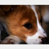 Ivy (Puppy)